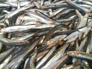 Photo: We traveled as far as the Rialto Bridge, and walked through the market. These are anchovies, Rialto Markets.