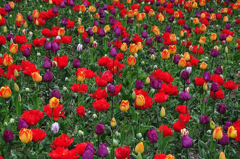 a colori di flori