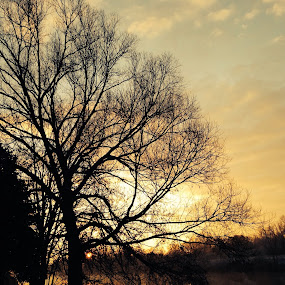 Morning commute gift by Gary Poulsen - Instagram & Mobile iPhone ( reflection, tree, sunrise, river )