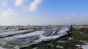 Uno de los invernadero que se ha venido abajo por el temporal.