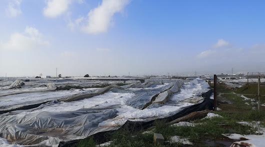 La Junta eleva a más de 1.000 las hectáreas afectadas por el granizo en Níjar