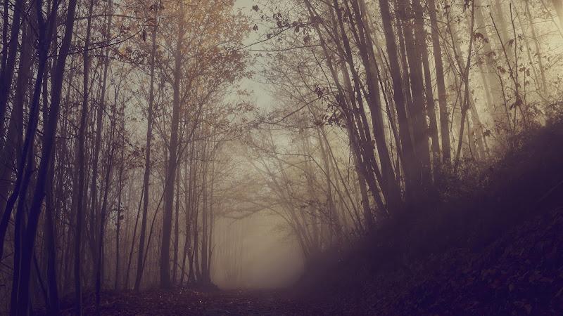 ....mi ritrovai per una selva oscura di utente cancellato