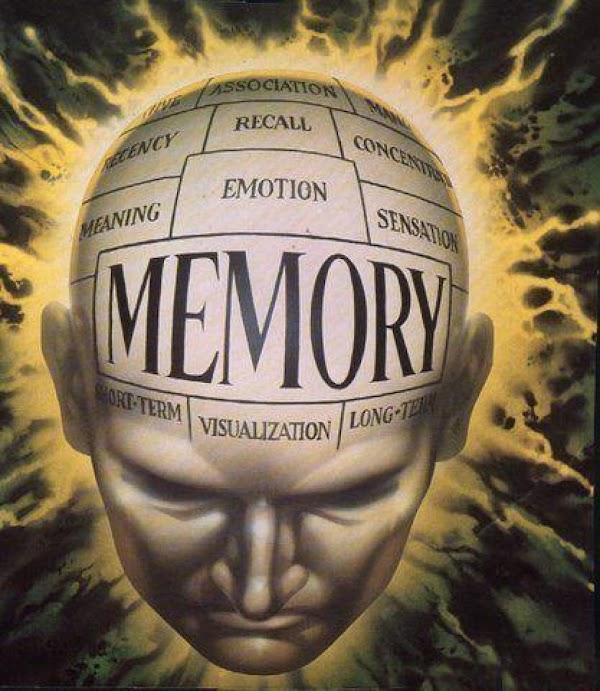 Maintain Your Memory with Thiamin (Vitamin B1)  Thiamin participates in enzymatic reactions central to energy...