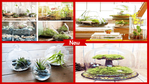 Amazing DIY Terrarium Kit 6.1 screenshots 1