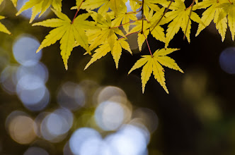 Photo: Autumn leaves at a small shrine in Chiba prefecture