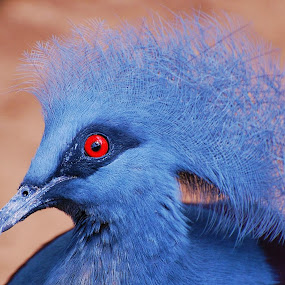 by Donna Van Horn - Animals Birds (  )