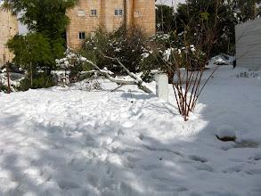 Photo: גינת החווה בשלג