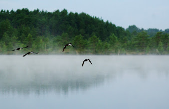 Photo: For #FoggyFriday, curated by +Thomas Russ Arnestad and for #FlyByFriday, curated by +Meg Rousher.