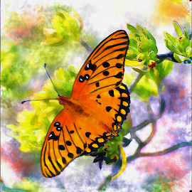 Passion Butterfly by Thomas Pound - Digital Art Animals ( watercolor, butterfly, passion butterfly, butterflies, insects, photoshop )