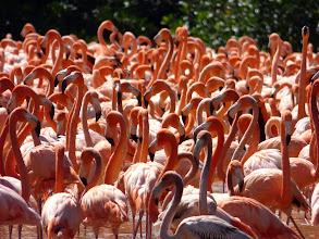 Photo: Flamingos at Celestun