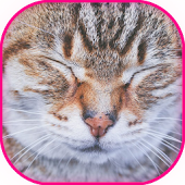 Purring Pat the sweet Cat Pet Simulator