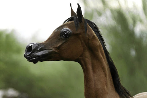 genetic modification of horses yay or neigh