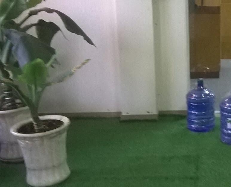 Khuyến khích xài Thảm cỏ nhựa sẽ gây bất ngờ