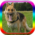 Dog Obedience Training icon