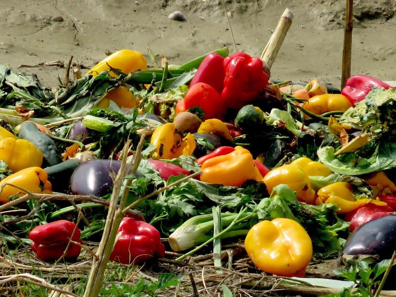 verdura al macero di mariellaturlon