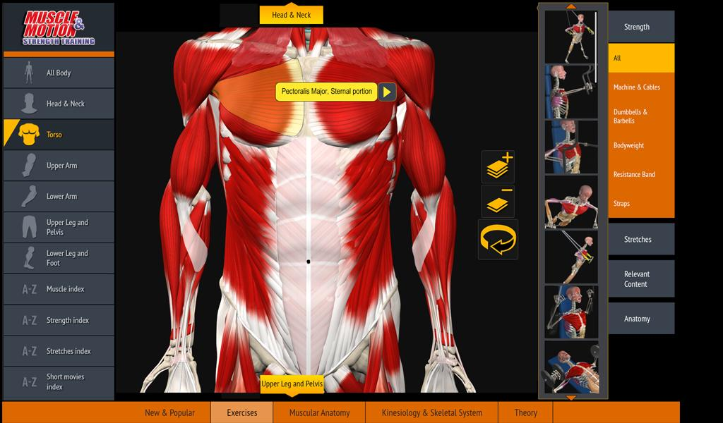 Muscle and Motion - Strength- screenshot