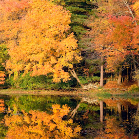 Concord's Golden Sunset by Anastasiya Manuilov - Landscapes Sunsets & Sunrises ( fall, reflection, sunset, trees )