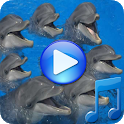 Dolphins songs to sleep icon