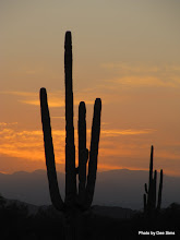 Photo: (Year 3) Day 55 - Cactus in the Early Morning #2