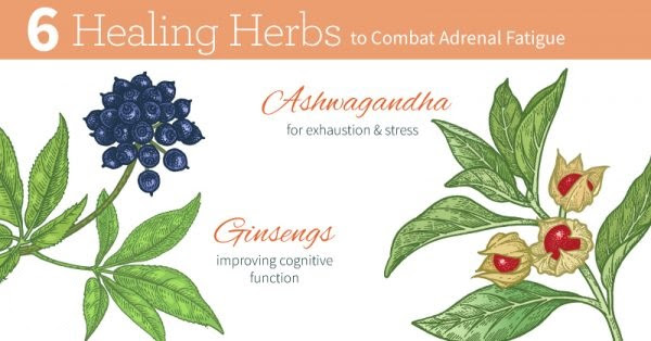 Adaptogens 101: A Beginner's Guide to Adrenal Support