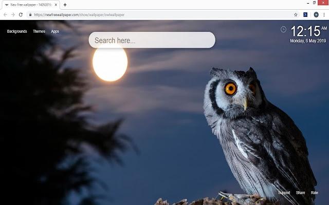 Owl Wallpaper Hd New Tab