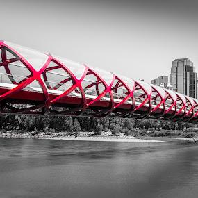 Beautiful Peace Bridge  by David Kotsibie - Buildings & Architecture Bridges & Suspended Structures ( water, landmark, canada, alberta, calgary, bridge, architecture, bridges, river )