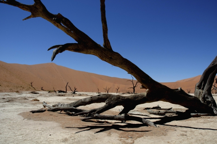 La natura del deserto di amarchisio