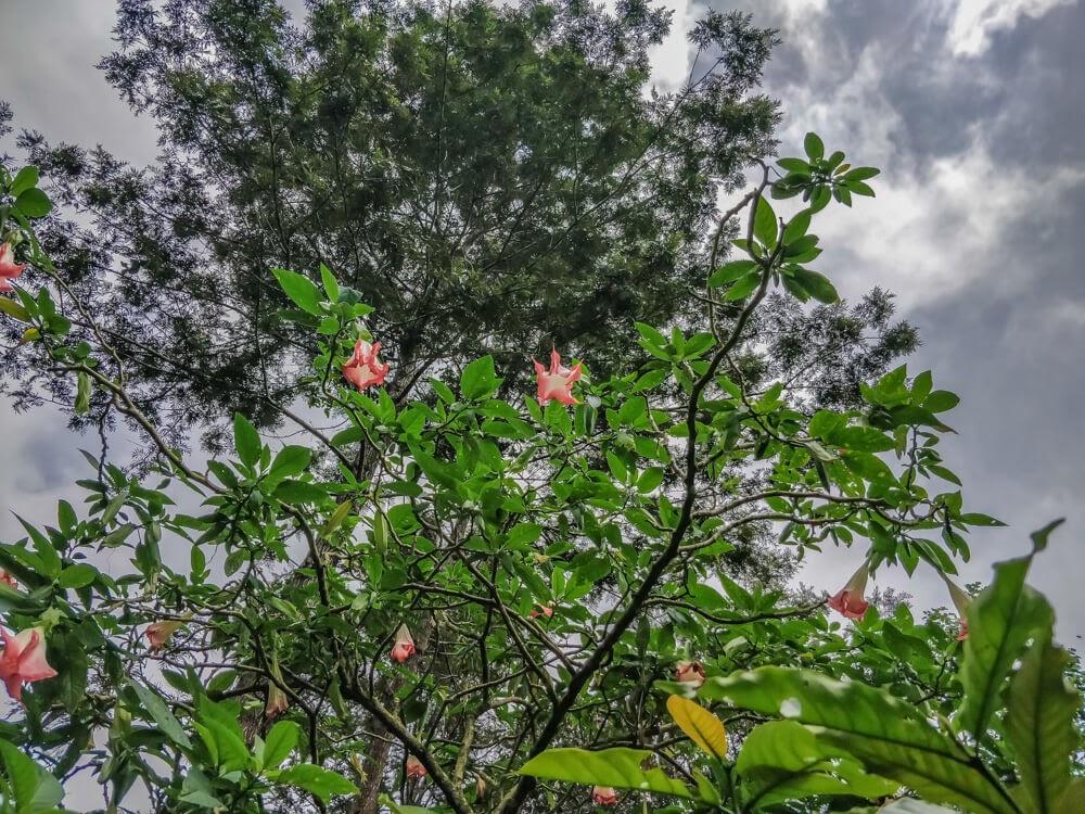 flowers+homestay+kodava+madikeri+coorg+karnataka+state