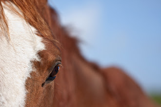 Photo: There's something magical about the eye's of a horse...