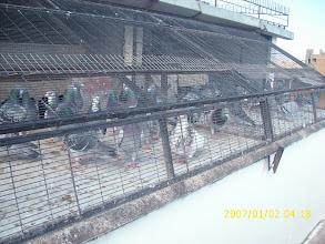 Photo: Mi equipo de vuelo para el año en curso 2010, hembras y machos asoleandose.
