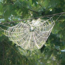 by Sandy Fetter - Nature Up Close Webs