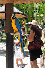 Photo: Сине-жёлтый ара (Ara ararauna)