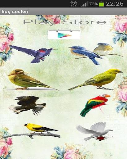 無料娱乐Appの鳥の音|記事Game