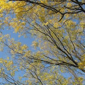 tree by Gordana Djokic - Nature Up Close Trees & Bushes ( sky, tree, nature, bleu, landscape )