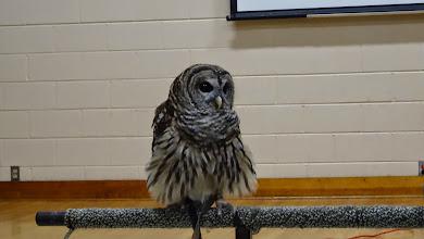Photo: Shadow a Barred Owl