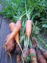 Photo: Zanahorias de la huerta