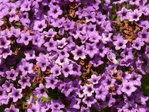 Zdjęcie: Kwiaty wanilii (fot. Hans - pixabay)