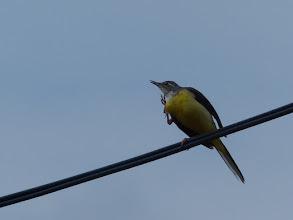 Photo: 小鳥も手を振って見送ってくれました。