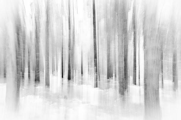 In the wood di Valentina D.