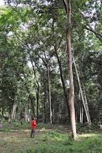 Photo: alberi enormi