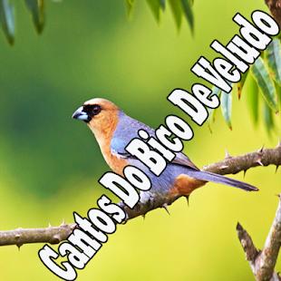 Cantos Do Bico De Veludo Mp3 - náhled