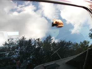 Photo: A little frog clings to the crew cab window of our Chevy Truck