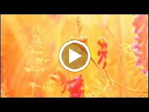Video: Antonio Vivaldi  Beatus vir [psalm 111] in C major (RV 597) - Part I -
