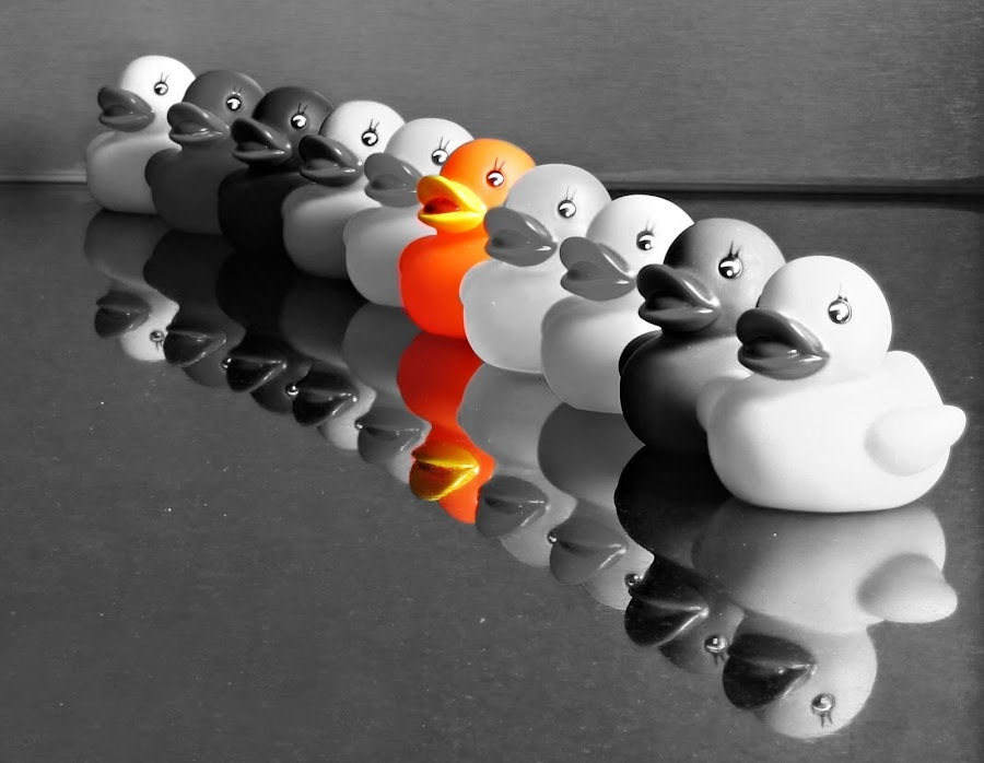 Orange duck by Anita Berghoef - Artistic Objects Toys ( orange, selective color, black and white, ducks, duck, artistic, artistic objects,  )