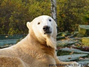 Photo: Ein-Ohr-Knut, dafuer mit Bart ;-)