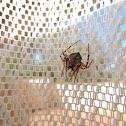 Wrap-around Spider
