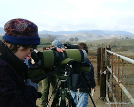 Photo: Mary Wiznewski studies Bald Eagles at Paicines Reservoir.