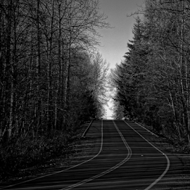 Fall road  by Todd Reynolds - Black & White Landscapes