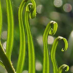 by Bozidarka Scerbe Haupt - Nature Up Close Leaves & Grasses ( canon, bouquet, nature, green, leaves )