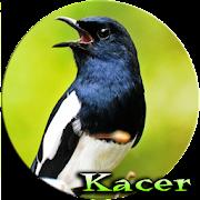 Master Kicau Kacer Offline